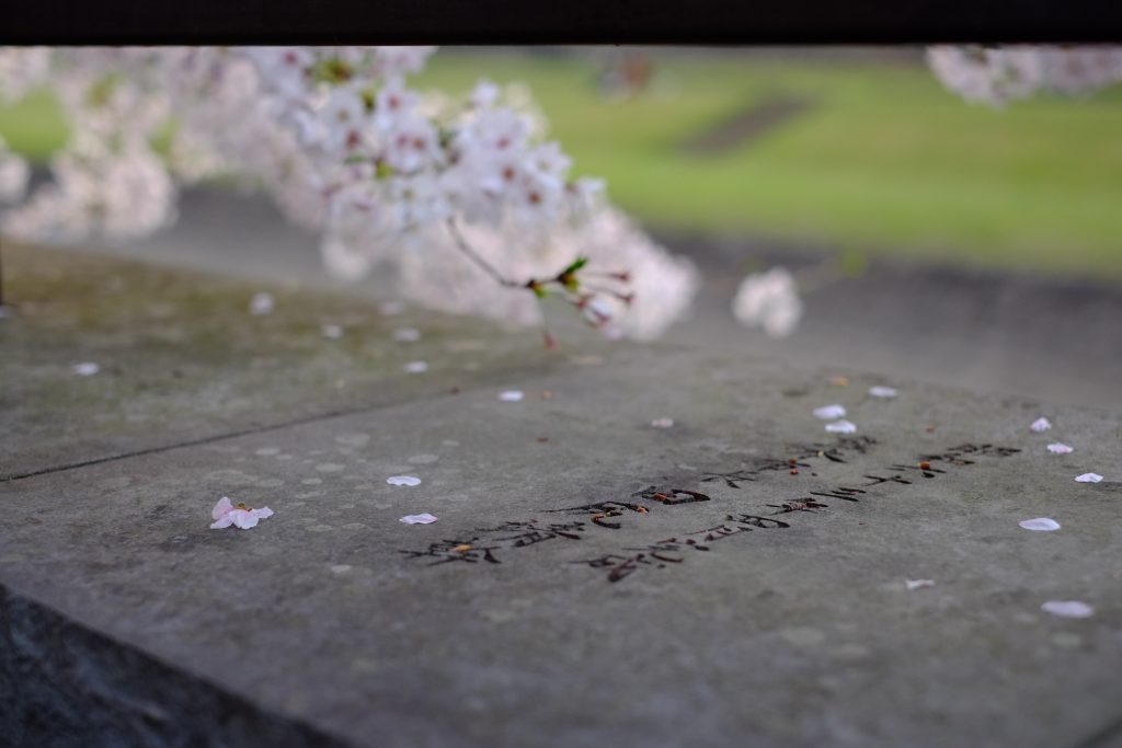 Cherry blossoms on stone, with Japanese etched into the surface,